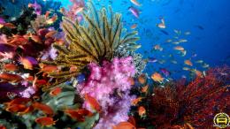Đảo Ngọc Phú Quốc – điểm du lịch nổi tiếng