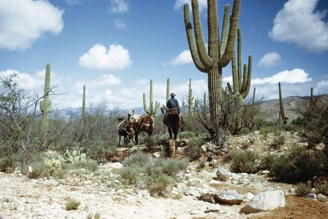 Tanque Verde Ranch là một trong những nơi chăn nuôi