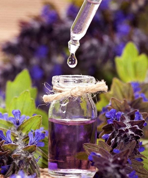 Hoa Lavender Pháp